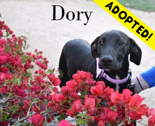 Dory - One Dane at a Time