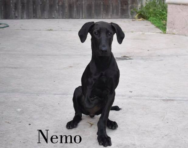 Nemo - One Dane at a Time