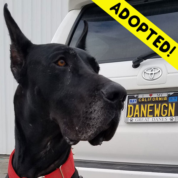 Angus - One Dane at a Time