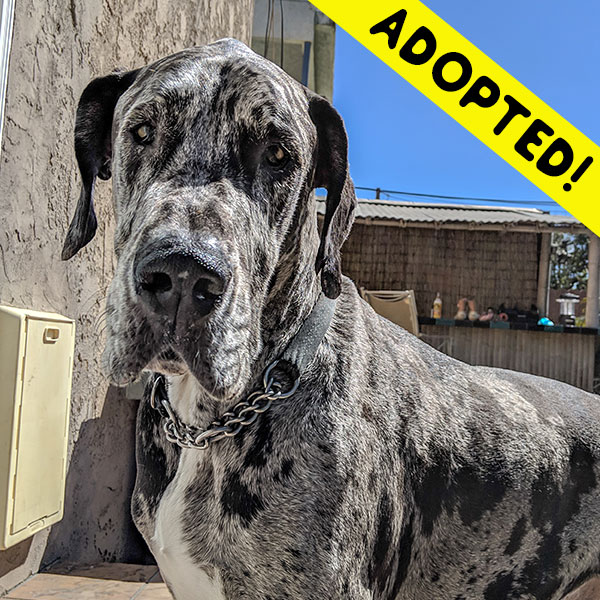Billy - One Dane at a Time