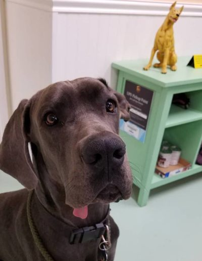 Benny - One Dane at a Time
