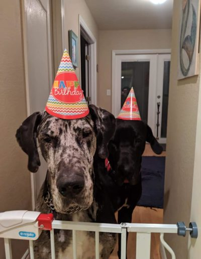 Billy and Louie - One Dane at a Time