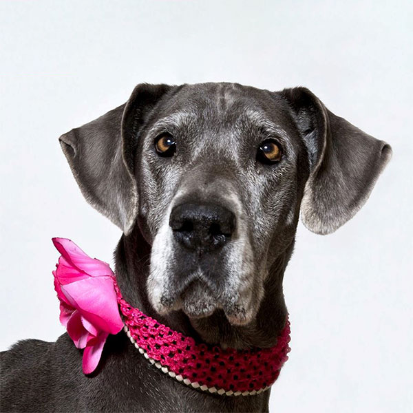 Dutchess - One Dane at a Time