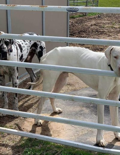 Morris - One Dane at a Time