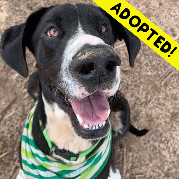 Pickles - One Dane at a Time