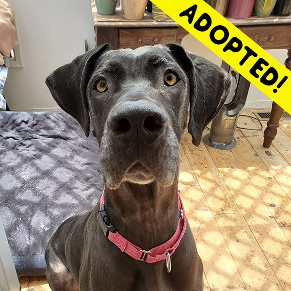 Raven - One Dane at a Time