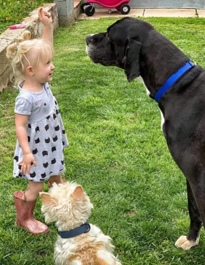 Rocky - One Dane at a Time