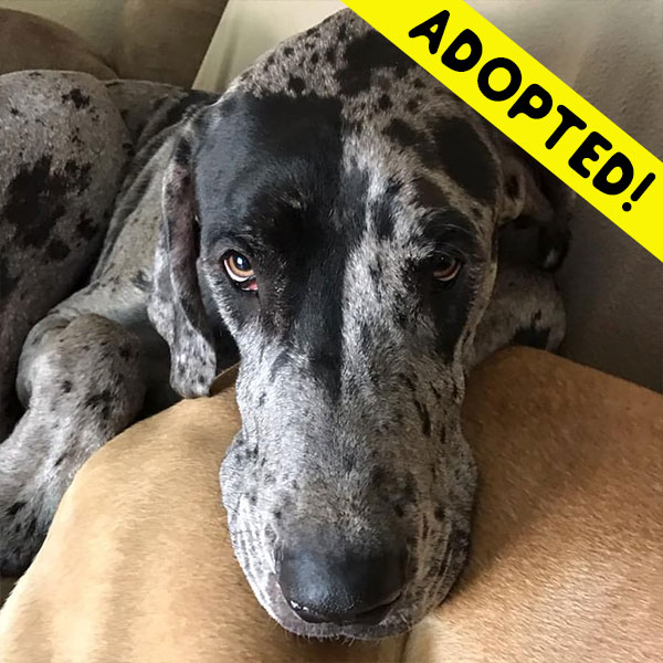 Roscoe - One Dane at a Time