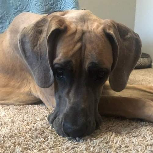 Cyrus - One Dane at a Time