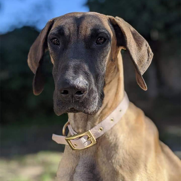 Daisy - One Dane at a Time