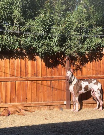 Silas - One Dane at a Time