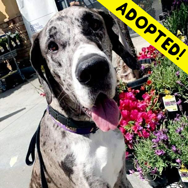 Frankie - One Dane at a Time