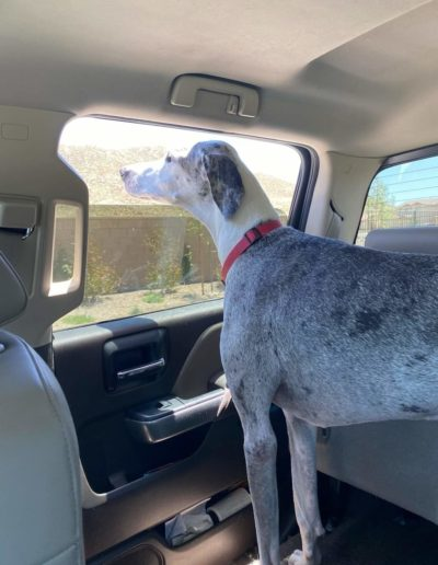 Marley - One Dane at a Time