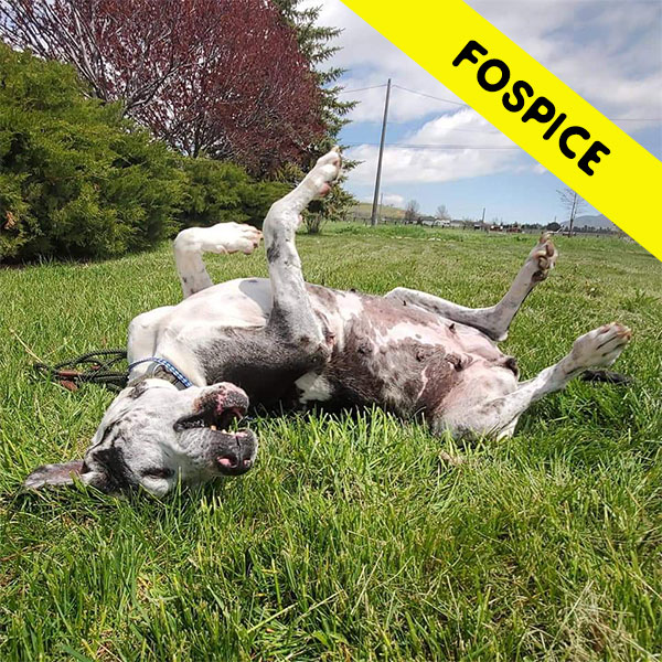 Misty - One Dane at a Time