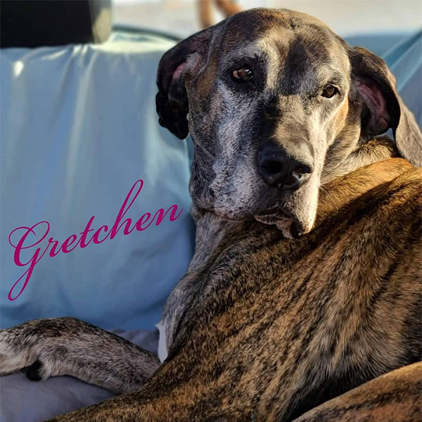 Gretchen - One Dane at a Time