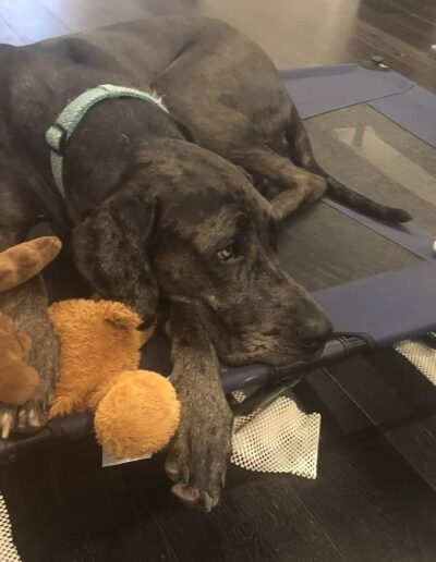 Minnie - One Dane at a Time
