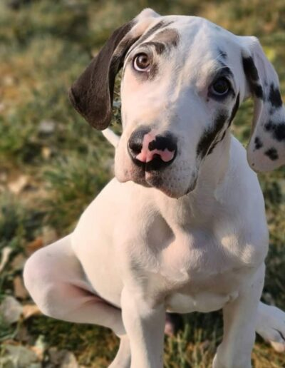 Tito - One Dane at a Time